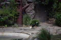 bird-park-3